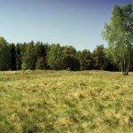 Cecchini in Camouflage di Simon Manner