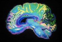 Identificati i neuroni che processano le emozioni