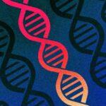 microsoft excel genetica umana